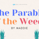 Maddie Parable of the Sower Banner 960 x 480